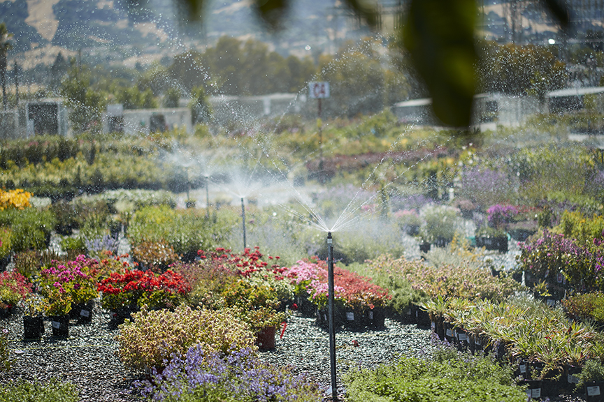 Read Tips On Visiting Our Nurseries
