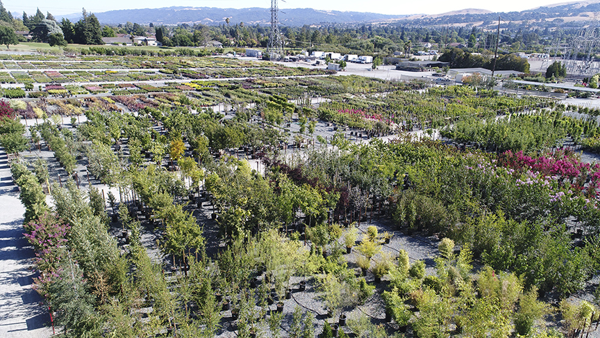 Visiting Devil Mountain Whole Nursery